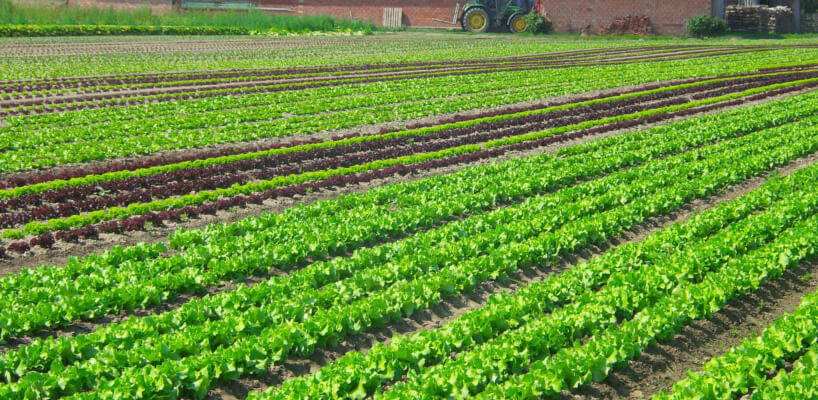 Fertilizarea culturilor de legume in sere, solarii si camp